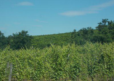 Somlószőlős